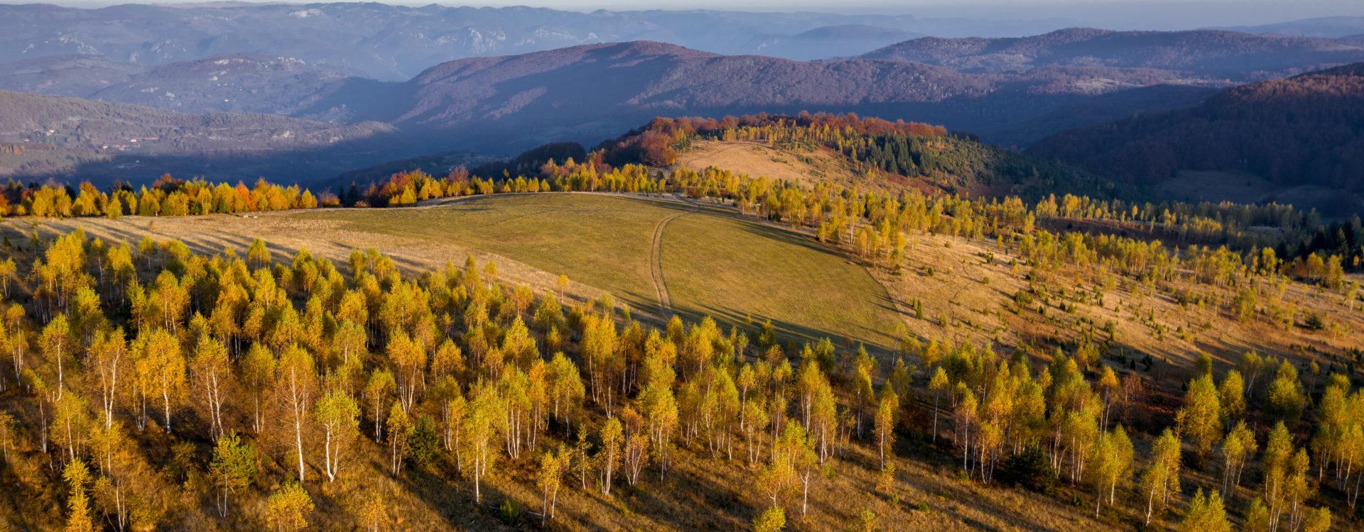 Гајимо и негујемо шуме за будуће генерације